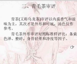 青茶(乌龙茶)的审评