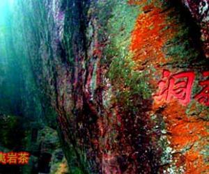 茶洞:武夷山摩崖石刻